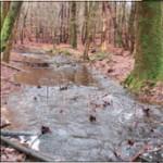 De veelal rustig kabbelende Hier¬dense beek is door de vele regen en het dode hout dat bewust in het water is gegooid verandert in een woeste stroom (foto G.J. Blankena)