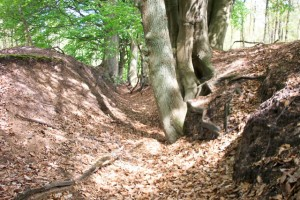 Droogstaand deel van de Gravinnebeek. Links en rechts hoge beekwallen