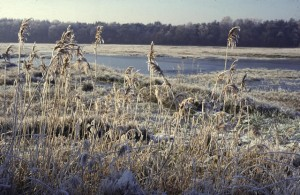 Winter in het Wisselse veen