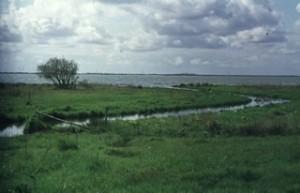 De monding van de Hierdense Beek ter plaatse van het randmeer
