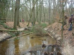 Leuvenumse beek - dood hout brengt beek tot leven