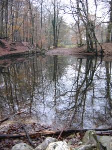 Bovenste vijver Slijpbeek bezien vanuit het noorden