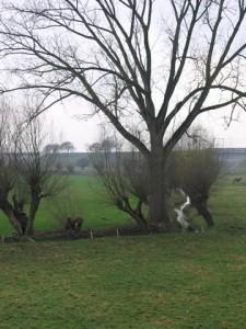 Slijpbeek in de uiterwaarden, de Rosandepolder
