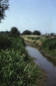 De Kortenburgsebeek in de uiterwaarden