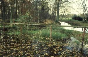 Molenbosje of 'wijerd op struweel', een rabattenbos. Rechts de Bovenbeek, achter het hek de afleiding uit de zuidelijke beek met daarachter het molenbosje