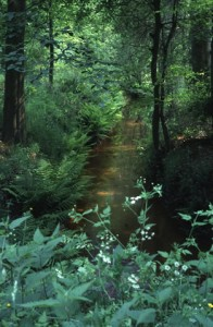 De Hartense Molenbeek in Niersen