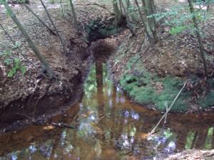 Brongebied de Motketel (Henri Slijkhuis)