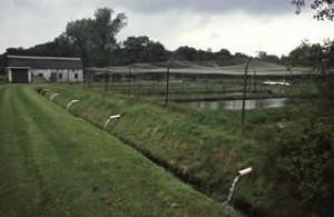 Viskwekerij Het Hol. Het water uit de opgeleide beek wordt door de vijvers geleid naar de onderbeek