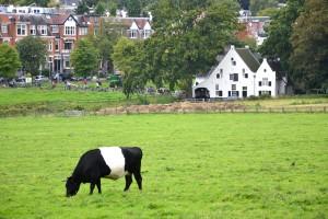 Algemeen beeld De Molenplaats met weiland in het 'dal' van de St Jansbeek met Lakenvelders in Park Sonsbeek. Op de achtergrond de burgemeesterswijk van Arnhem.