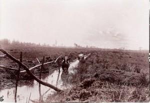 Nijmolense-beek met koeien 1903. (Vaassen.nu)