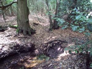 Vlasbeek op overgang droog- en watervoerend deel (H. Slijkhuis)
