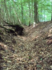 Tongeren Vlasbeekdeel zonder water (H. Slijkhuis)